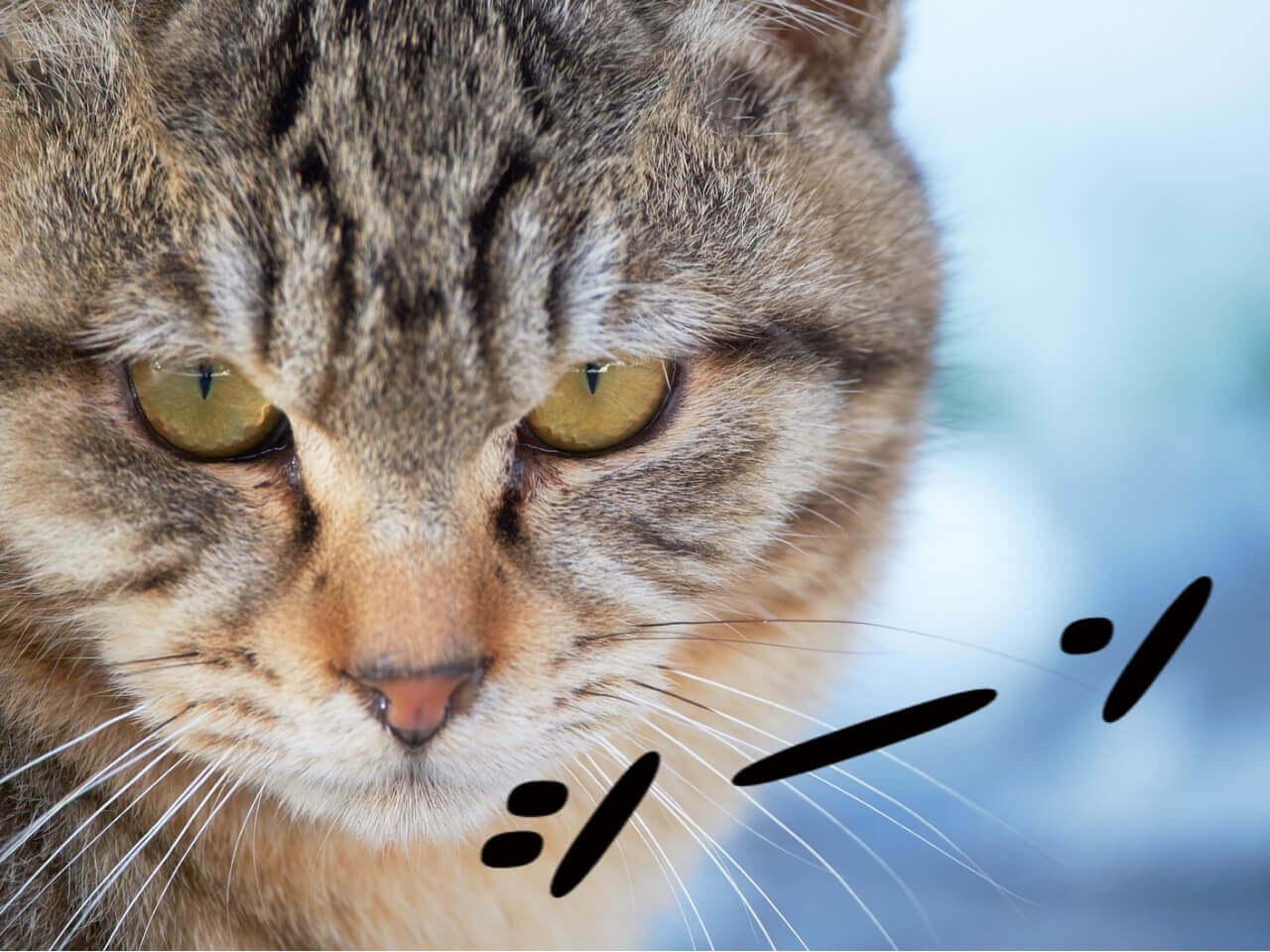 黙ってこちらをみつめる猫