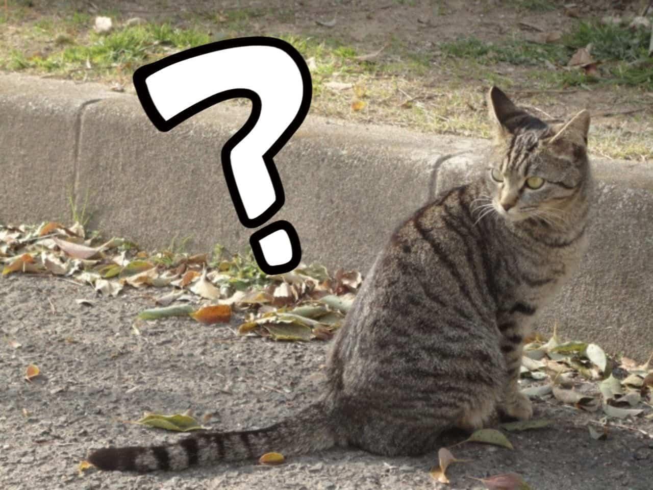 敏感に気付いて後ろを振り返る猫