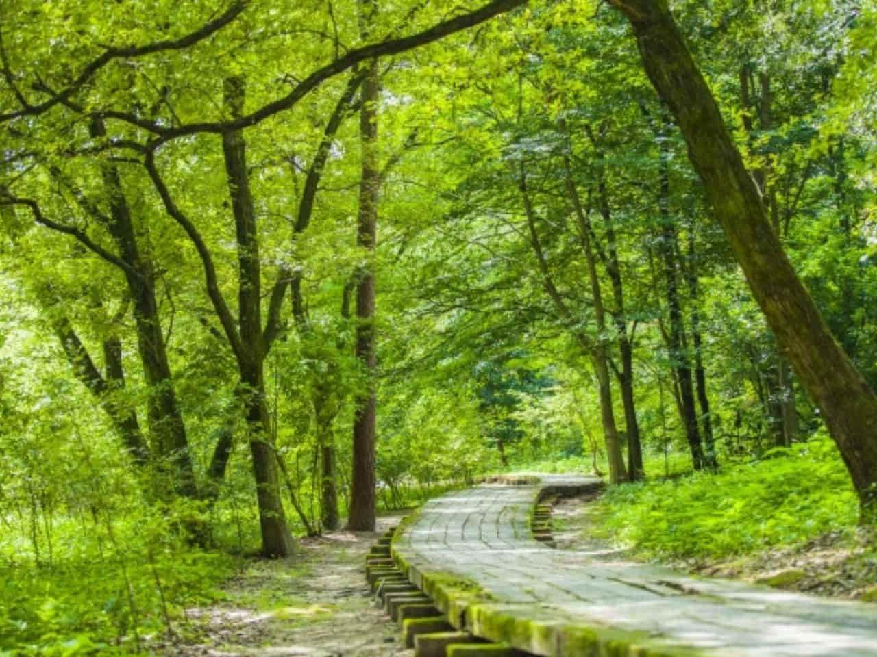 朝から清々しい自然豊かな散歩道