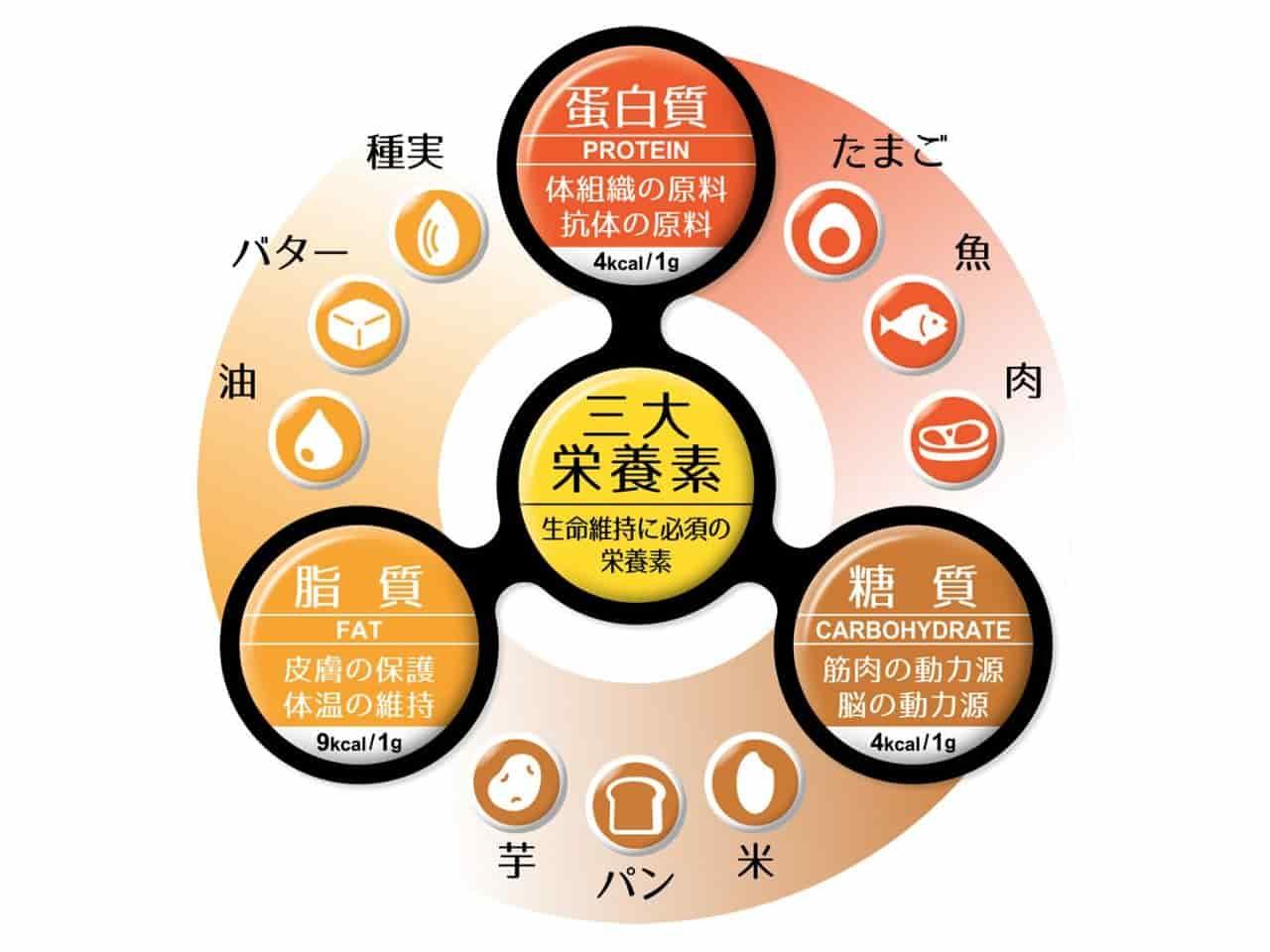 三大栄養素のイラスト