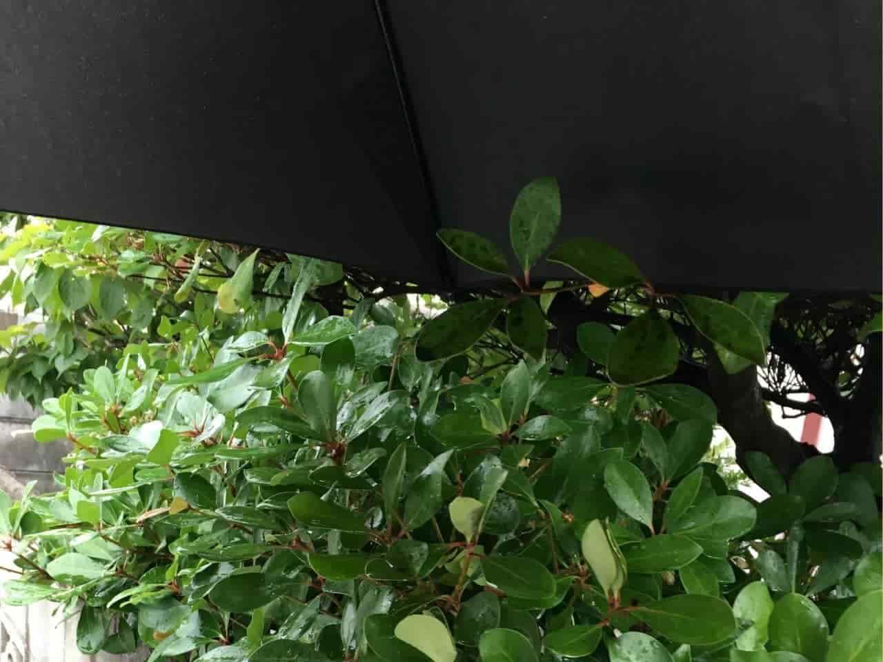 垣根にぶつかる傘