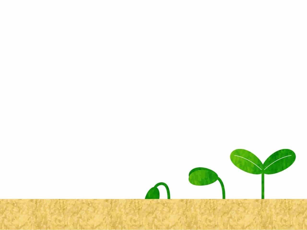 土から芽を出して成長する若葉
