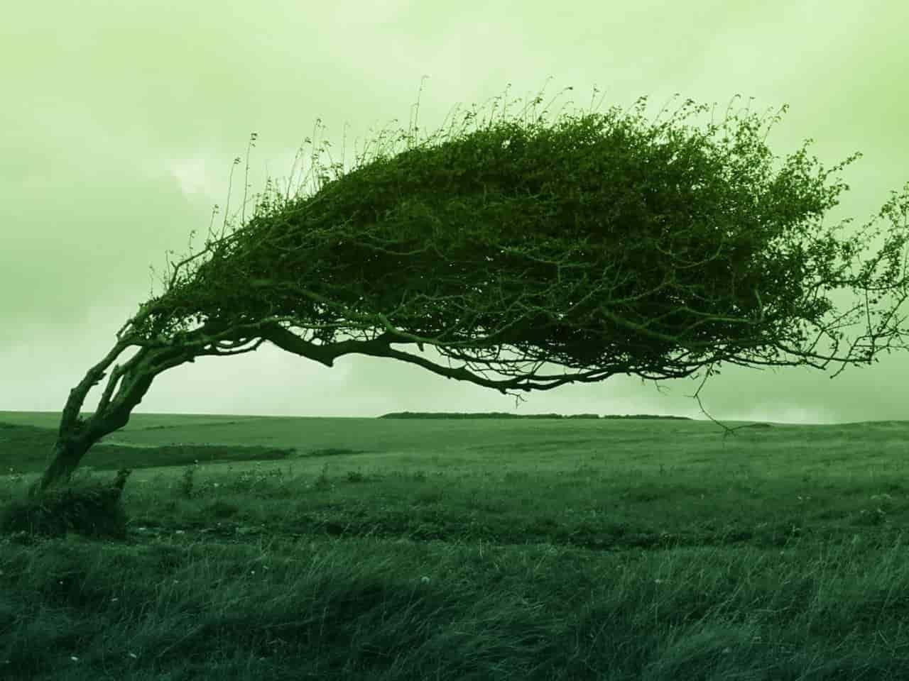 強風で倒れそうになる木