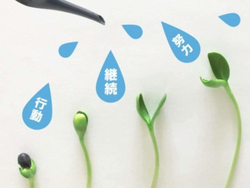 新芽に水を与える