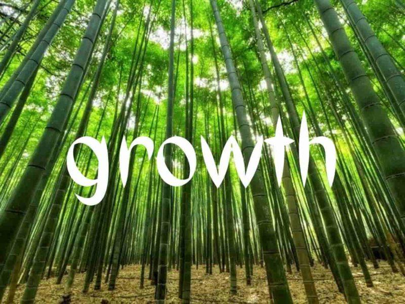 成長した竹