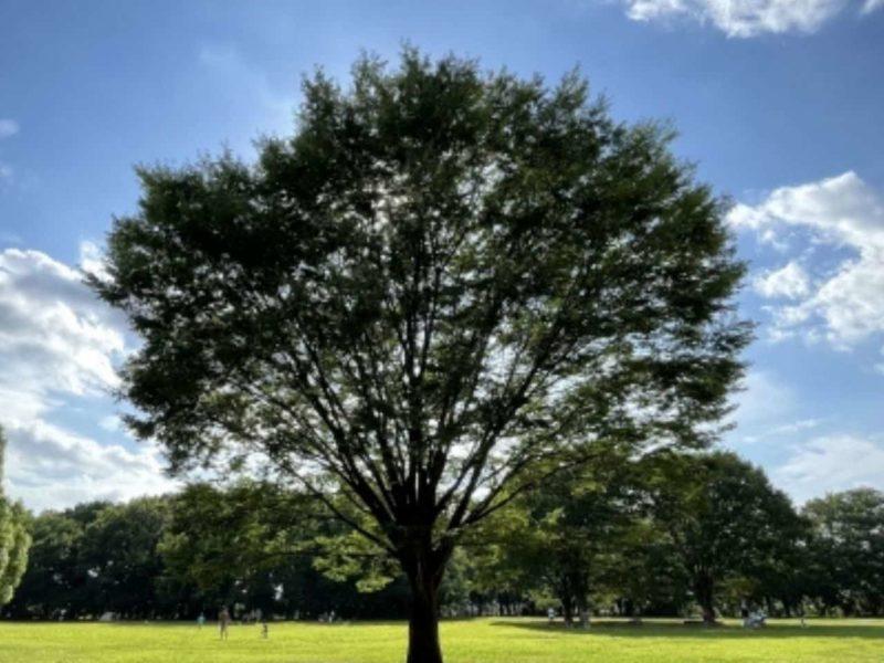 自立している大きな木