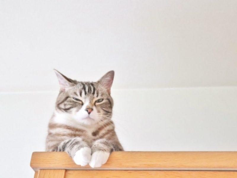 嫌そうな表情の猫