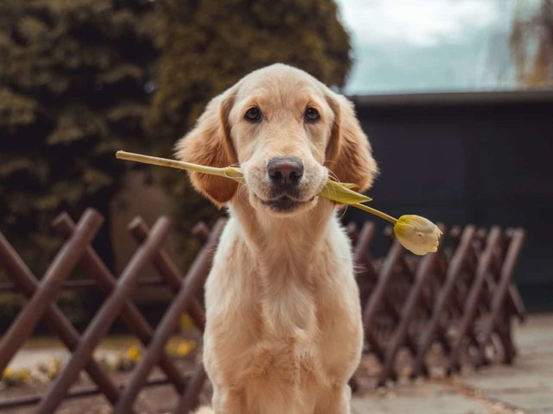 花をくわえる犬