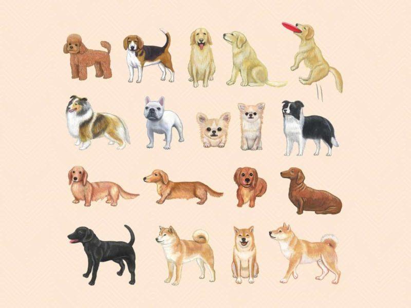 色々な種類の犬
