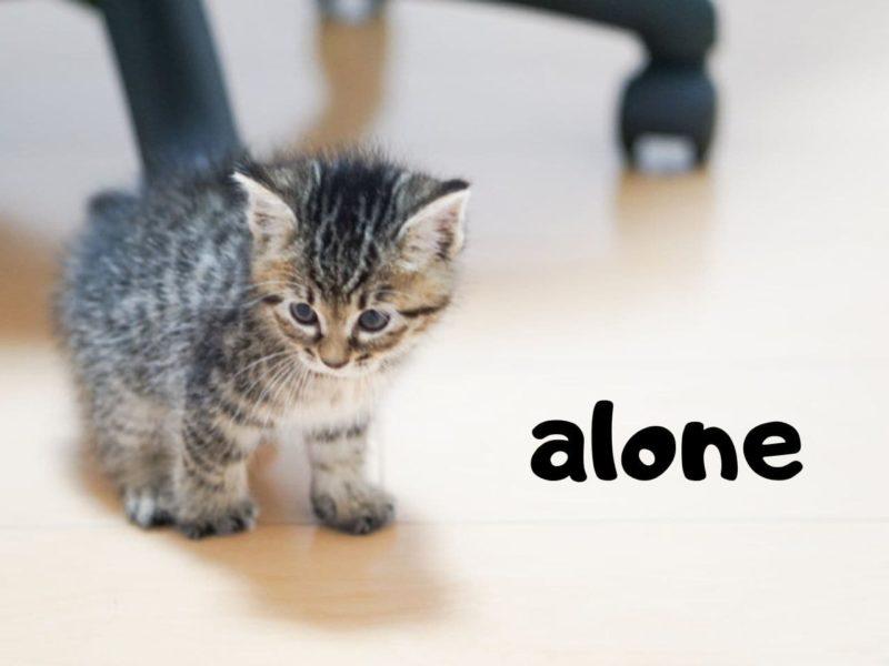 ひとりぼっちの子猫